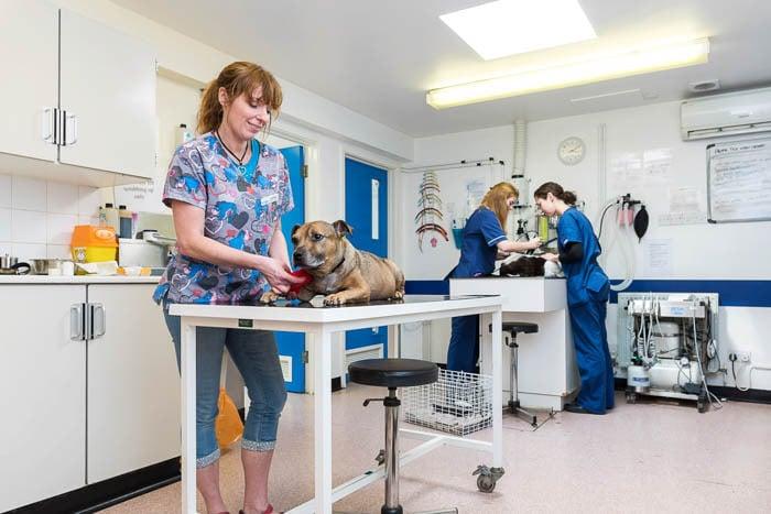 veterinary-practice-photography
